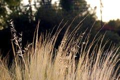Ervas secadas do outono Imagem de Stock