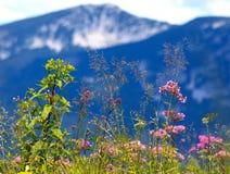 Ervas selvagens que crescem em um prado nos alpes foto de stock