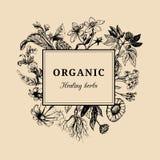 Ervas tiradas mão do vetor Officinalis, plantas cosméticas esboçou ilustrações Cartão floral ou cartaz do vintage Foto de Stock