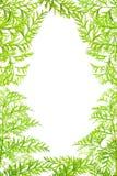 Ervas verdes do quadro Imagens de Stock