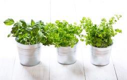 Ervas verdes frescas em uns potenciômetros Fotografia de Stock Royalty Free
