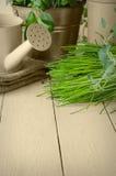 Ervas verdes Potted no Sepia fotos de stock