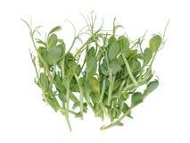 A ervilha brota a salada fotos de stock royalty free