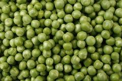 Ervilha 'eixo do verde de Hurst' Fotografia de Stock