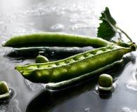 Ervilhas verdes molhadas no fim macro da ervilha do feijão da tabela acima da luz vegetal da chuva fotografia de stock
