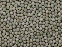 Ervilhas verdes secadas fotos de stock
