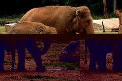 Erwachsen- und Schätzchenelefanten Stockbilder