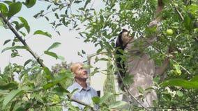 Erwachsene Frau steht auf der Treppe und wählt einen Apfel aus stock video