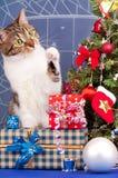 Erwachsene getigerte Katze Lizenzfreies Stockbild