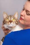 Erwachsene getigerte Katze Lizenzfreies Stockfoto