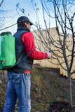 Erwachsene Männer, die Obstbäume früh im sprigtime sprühen Lizenzfreie Stockfotos