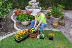 Erwachsener Älterer, der Blumen pflanzt Stockbild