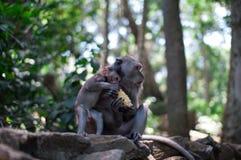 Erwachsener Affe zieht Baby ein Stockfotos