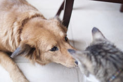 Erwachsener Hund und Cat Meeting zum ersten Mal in der Küche Stockfotos