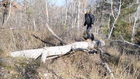 Erwachsener Mann, der auf gefallenen Baum im Wald geht stock footage