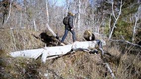 Erwachsener Mann geht auf gefallenen Baum stock footage