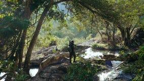 Erwachsener Mannphotograph, der durch schönen Dschungel geht stock footage