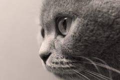 Erwachsenes Katzenporträt, Nahaufnahmeporträt von Augen, lokalisiert stockfotos