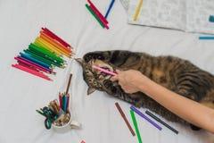 Erwachsenes Malbuch mit einer Katze Stockfotos