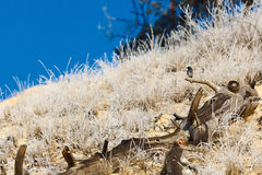 Erwachsenes wildes Vogel photographedon der alte Baum Lizenzfreie Stockfotografie
