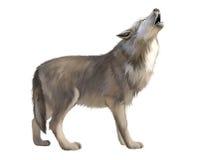 Erwachsenes Wolfheulen am Mond. Stockfoto