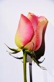 Erwartungen für Liebe, Symbol Stockfotos