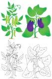 Erwt en aubergine royalty-vrije illustratie