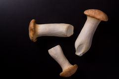 Eryngii蘑菇 免版税库存图片