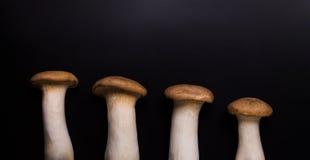 Eryngii蘑菇 免版税图库摄影