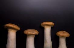 Eryngii蘑菇 免版税库存照片