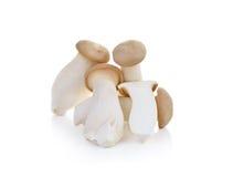 Eryngii гриба на белой предпосылке Стоковая Фотография RF