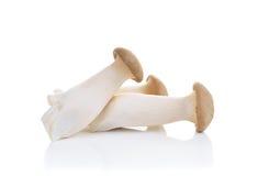Eryngii гриба на белой предпосылке Стоковое Фото