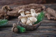 国王蚝蘑在木背景的侧耳属eryngii 土气样式 库存图片