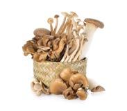 Eryngii, Hatake shimeji and Maitake mushroom in bamboo basket Royalty Free Stock Images