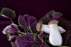 Eryngii mushroom with red spinach Stock Photo