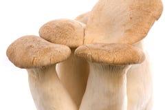 Eryngii Mushrooms Isolated