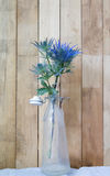 Eryngium planum Blue Sea Holly flowers on wooden background Royalty Free Stock Photos