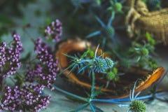Eryngo blu su fondo scuro Natura morta mistica immagine stock