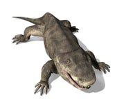 Eryops - Prehistoryczna amfibia 2 Zdjęcie Stock