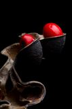 Erythrina ou graines chanceuses d'haricot Photos stock