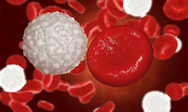 Erythrocyte, red blood cells, anatomy concept Stock Image