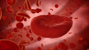 Erythrocyte, red blood cells, anatomy medical concept.  Royalty Free Stock Photo
