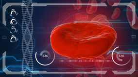 Erythrocyte, red blood cells, anatomy medical concept Royalty Free Stock Photos