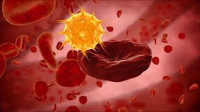 Erythrocyte, red blood cells, virus, bacteria. anatomy medical concept Stock Photos