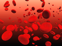 Erythrocytes Stock Image
