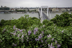 Erzsebet bridge Royalty Free Stock Image
