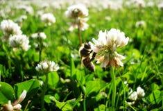 Es abeja Foto de archivo