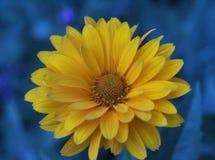 Es el encantar, flor fragante, hermosa, preciosa imagen de archivo