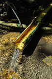 Esôfago natural do bambu foto de stock