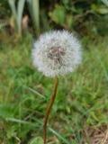 ¡Es hora de crecer, poca flor! foto de archivo